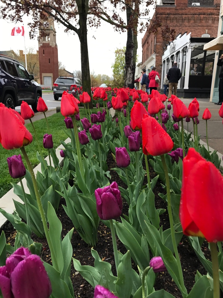 Niagara-on-the-Lake Tulips